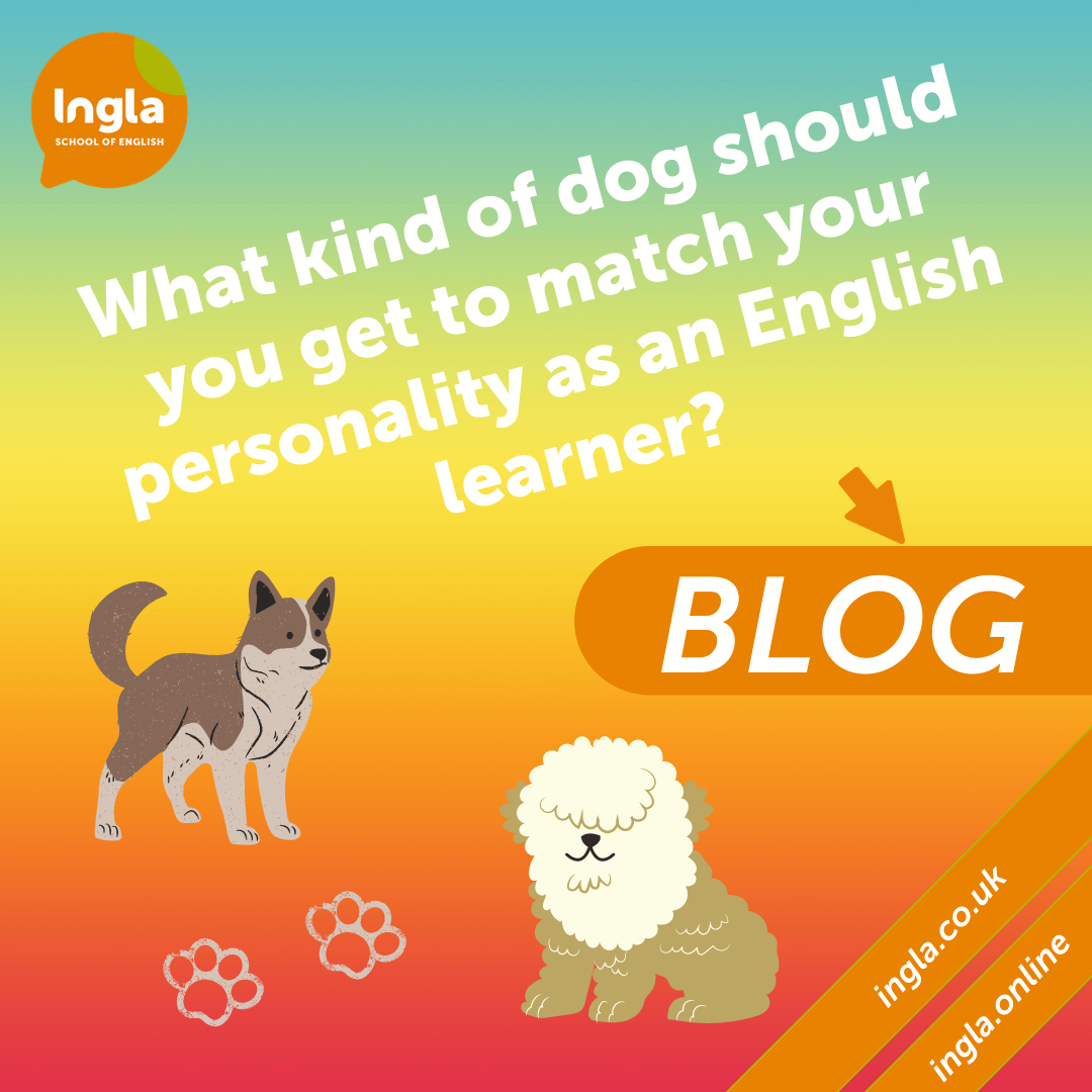 What kind of dog should you get to match your personality as an English learner?